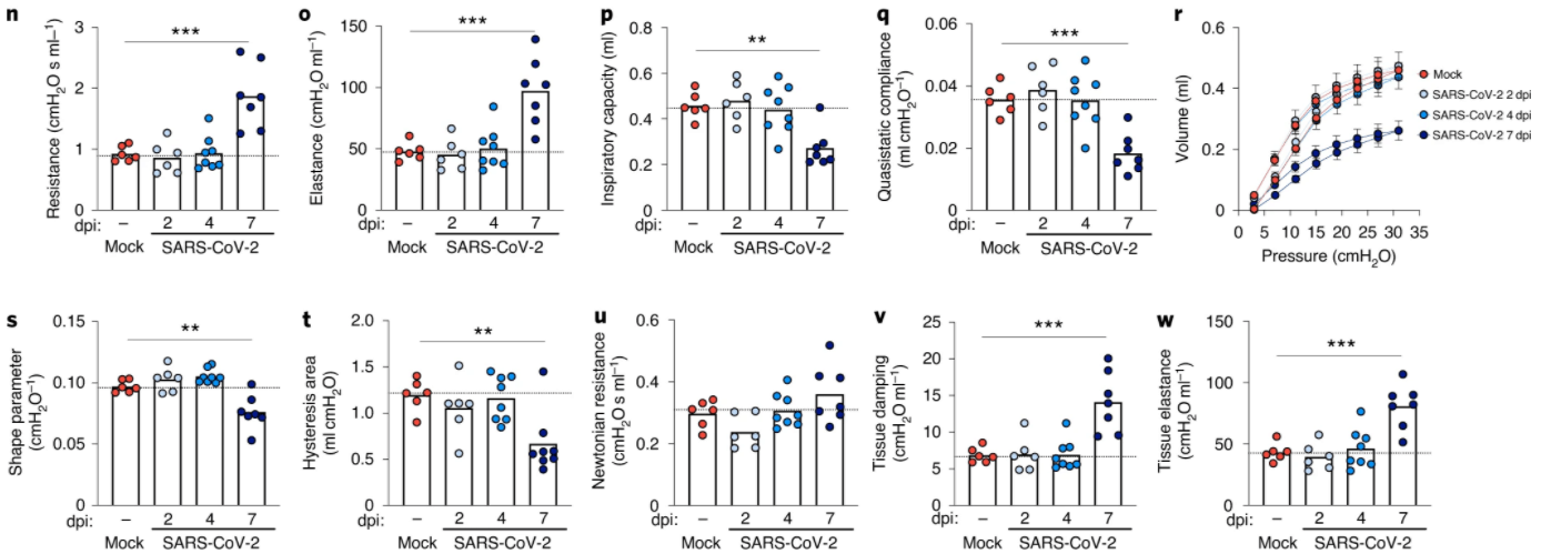 Mice as a SARS-CoV-2 Infection Model