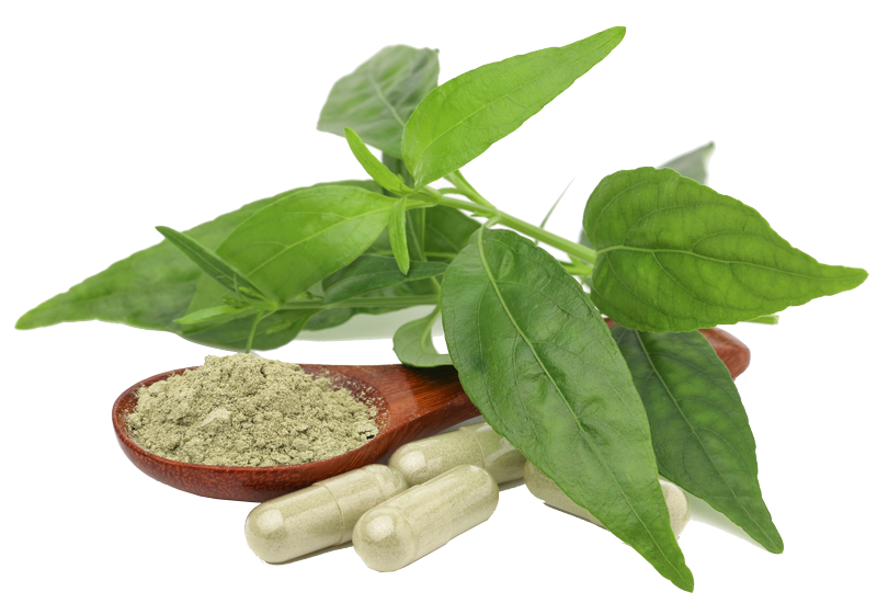 chinese herbs doctor in toronto